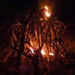 Burning Bush - Small Fire